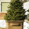 throw out the christmas tree